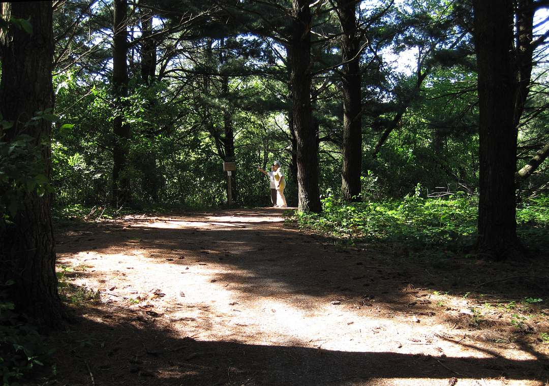 A walking-only path branches off from the pine-woods section.